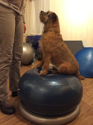 Animal Physiotherapy. Spark peanut
